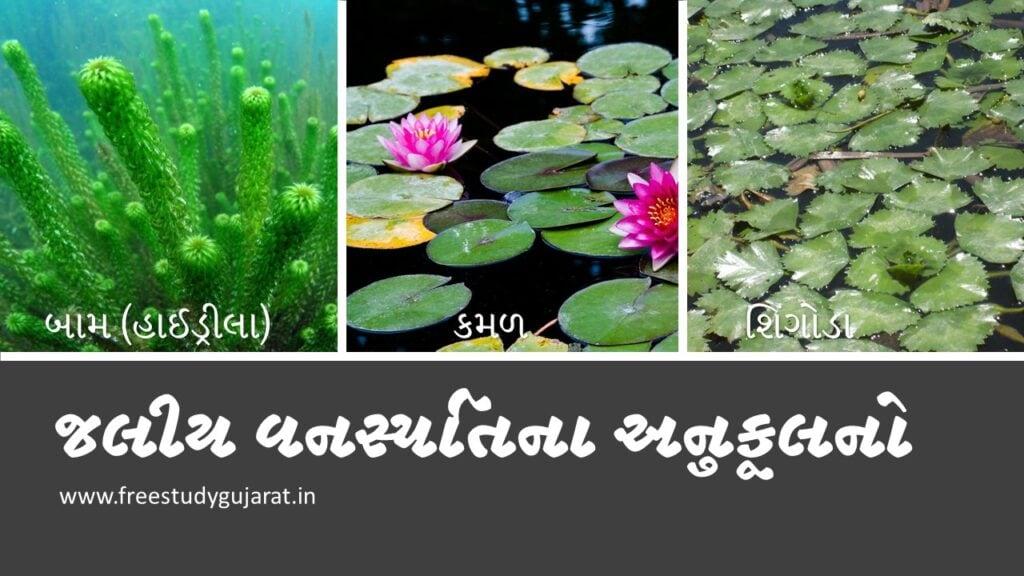 Adaptation of Aquatic Vegetation